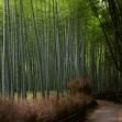 [Virtual Tour] Kyoto Arashiyama & Sagano Tour led by Local Expert with National Guiding License