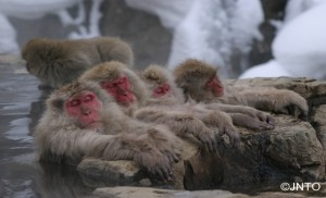 Snow Monkey 1-Day Tour!!