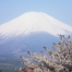 4-Day Sunrise Highlight : Mt. Fuji, Hakone, Kyoto, and Nara (One Way Trip Plan)